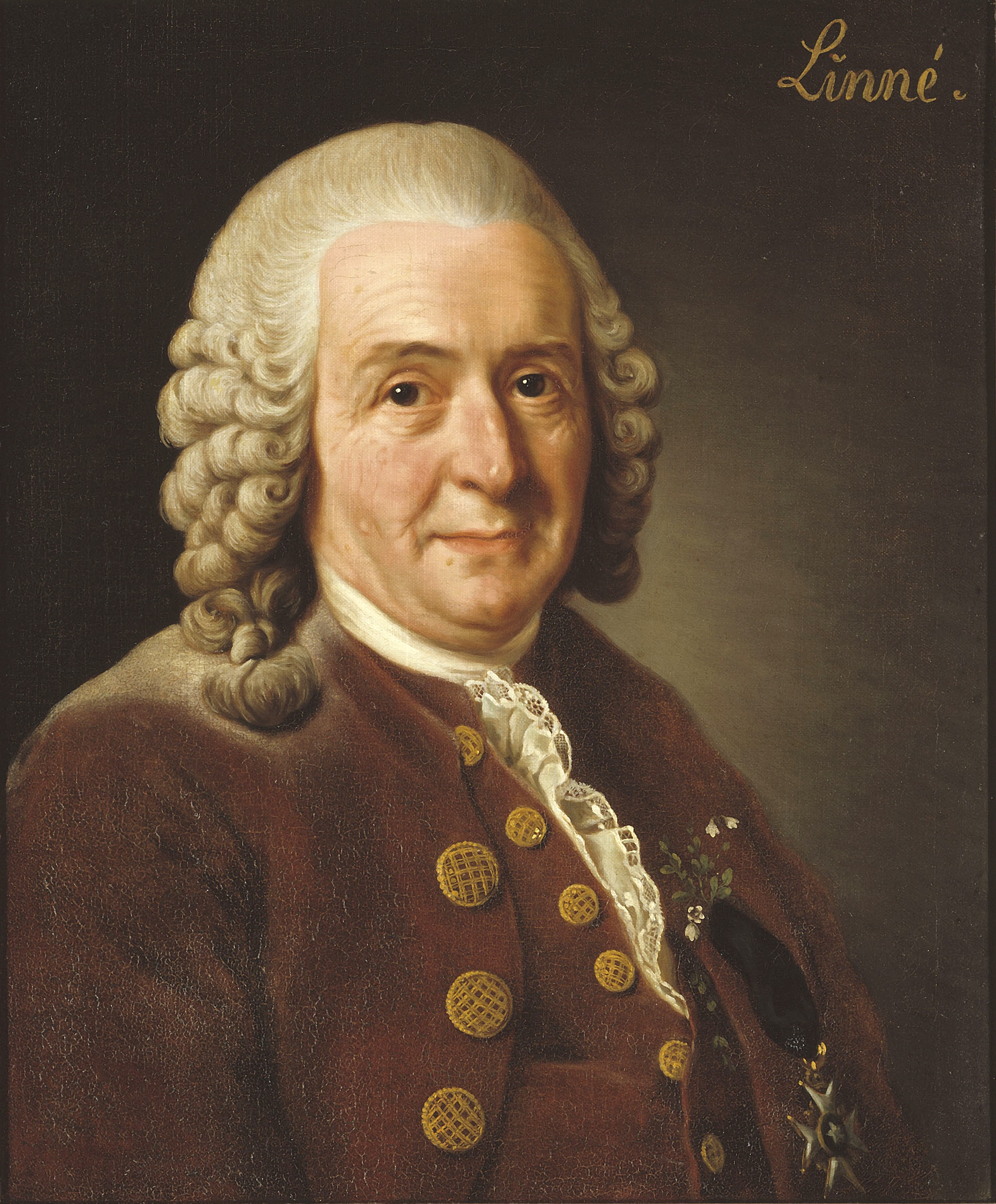 The famous Swedish naturalist Carl von Linné (1707-1778).